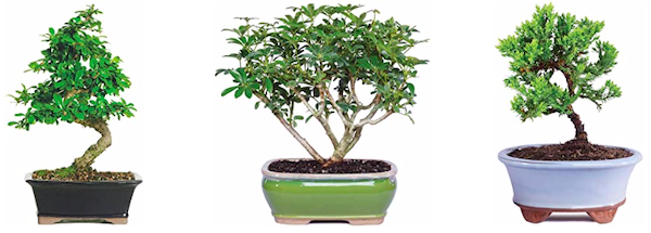 Bonsai Tree Centerpiece Ideas