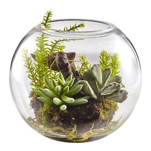 Succulents plant decor for home