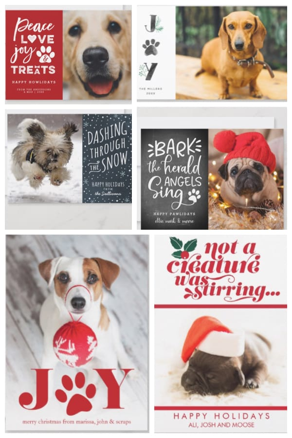 Dog Holiday Cards