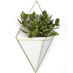 Succulent plant wall vessel gift