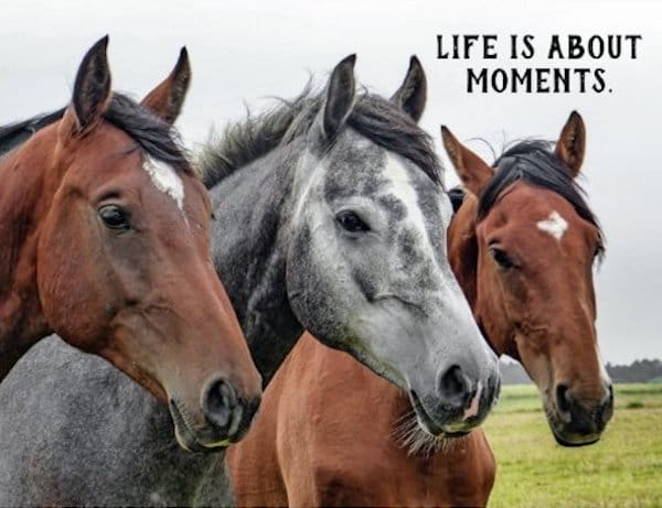 Life is About Moments - Horse Theme Party Invitations