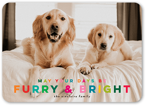Festively Furry Pet Holiday Card