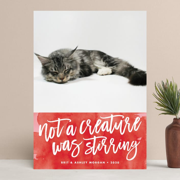 Not A Creature Was Stirring... Pet Holiday Photo Cards