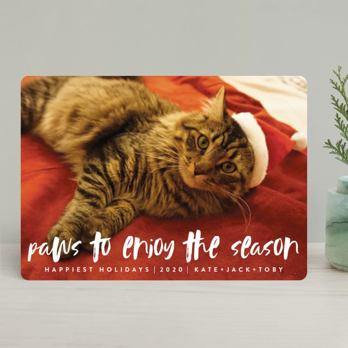 Paws to Enjoy the Season Pet Holiday Photo Cards