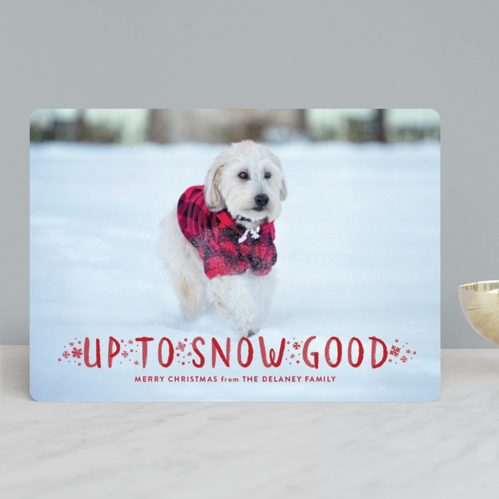 Snow Good Pet Holiday Photo Cards