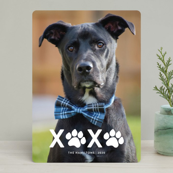 XOXO Pet Holiday Photo Cards