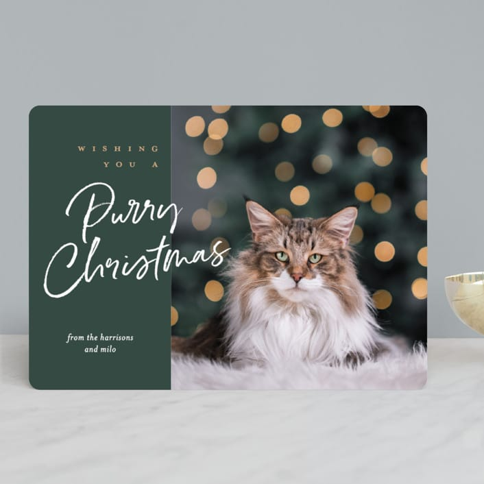 Purry Christmas Pet Holiday Photo Cards
